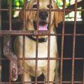 Chenil pour chien